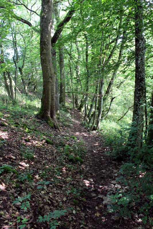 ... und Wald