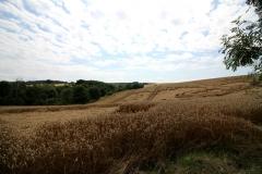OX-BoW – Umgeben von Feldern, Wiesen...